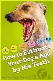 Dog Teeth By Age Goldenacresdogs Com