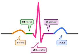Ecg Chart Labeled Electrocardiography Bioninja