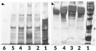 gel electroptic separation of