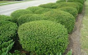 fast growing living fence plants easy care garden for the summer fresh  design and landscaping to