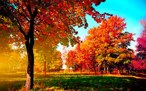 autumn trees wide desktop background
