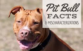 Pitbull Dog Years Chart