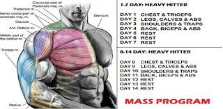 bodybuilding workout routines 10 tips for insane muscle gain