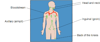 How To Check Your Lymph Nodes Skin Support