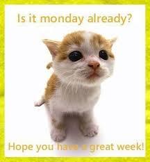 Resultado de imagem para nice week ahead, cats