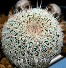 Compare Prices on <b>Cactus</b> Lot- Online Shopping/Buy Low Price ...