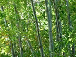 Paravent Für Fenster Bambus Fur Garten Techweekxyz