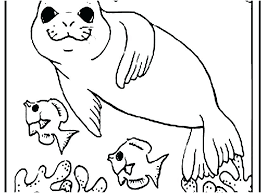 Seals Coloring Pages Baby Harp Seal Coloring Pages Zeal Page Copy