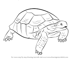 Small Picture Learn How to Draw a Desert Tortoise Turtles and Tortoises Step