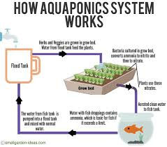 Self Cleaning Fish Tank Garden Aquaponics Systems For Indoor Gardening Small Garden Ideas