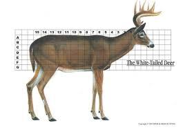 Deer Shot Placement Chart Album On Imgur