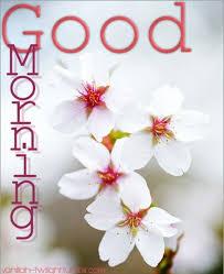 amazing morning wb6502