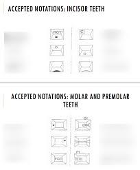 Dental Notation And Charting Diagram Quizlet
