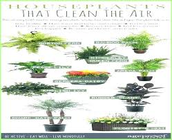 decoration houseplants that are not toxic to pets low light indoor plants safe for cats