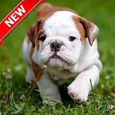 pitbull puppy wallpaper hd.  Pitbull Pitbull Pup Wallpaper HD Inside Puppy Hd U