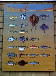 Fishing In The Outer Banks Outer Banks Vacation Rental