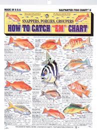Saltwater Fish Chart Fishermans Saltwater Fish Chart 6