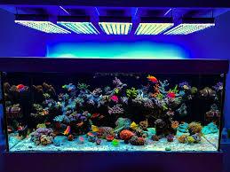 Superb Reef Aquarium Light Fotos Galerie