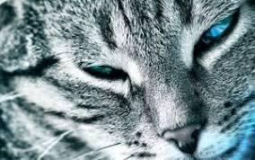 курсовая по оперативной хирургии кастрация кота Кот и Кошка Курс оперативной хирургии с топографической анатомией животных курсовая работа на тему Энтеротомия у кошки