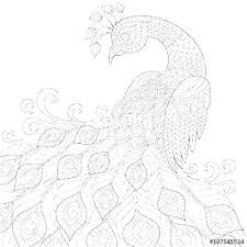 Peacock Coloring Pages For Adults Peacock Coloring Sheet Feather