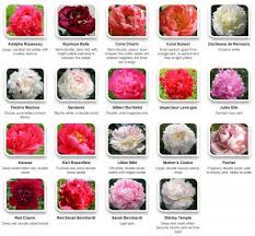 Cut Flower Chart 30 Flower Pictures And Names List 19 Flowers Peonies