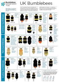 Bee Identification Chart Uk