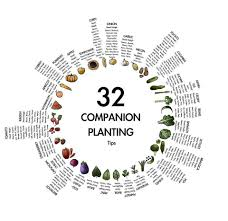Companion Planting Rochester Urban Agriculture
