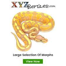 Ball Python Morph Chart Morph List World Of Ball Pythons