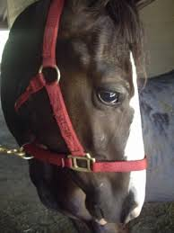 Horse Shipping Quotes Fascinating Horse Shipping Quotes Fresh Horse Shipping Rates Services