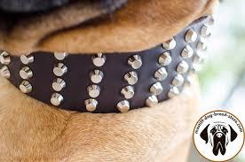 studded leather dog collar for bullmastiff close up