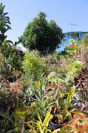 meet the guerrilla gardener changing south central los angeles with soil vogue