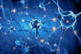 Una nueva teoría sugiere que la conciencia no se encuentra ubicada en el  cerebro - LA NACION