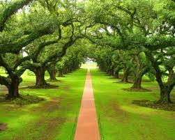 importance of trees value of trees about trees future khoj importance of trees value of trees about trees