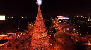 Christmas Tree - Árbol Gallo - Guatemala - YouTube