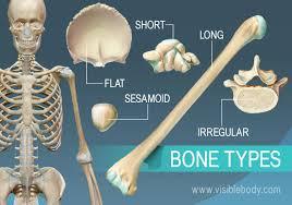 Small Animal Skull Identification Chart Types Of Bones Learn Skeleton Anatomy