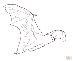 Small Picture Fruit bat coloring page Free Printable Coloring Pages