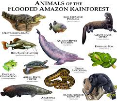 amazon river animals. Simple Amazon Animals Of The Amazon Flooded Rainforest By Rogerdhall  Intended River