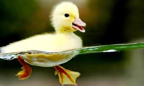 Cute Animals HD Wallpaper for PC (Page ...