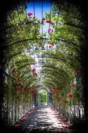 imperial roses gardens of schönbrunn palace in vienna lightorialist