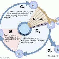 Comparing Mitosis And Meiosis Venn Diagram Compare Mitosis And Meiosis Venn Diagram Yelommyphonecompanyco