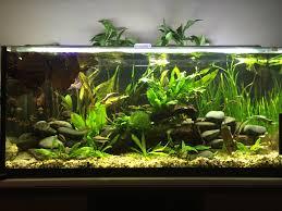 29 Gallon Tank Light Image Result For 29 Gallon Aquarium Fish Tank 29 Gallon