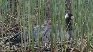 Resultado de imagen de pájaro empollando junto al río