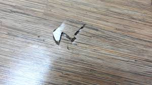 tarkett a floor of termites installed by evorich holding pte ltd in 2010 you