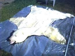 white polar bear rug front left side view of for sheepskin i fur