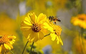 Summer Safety: How to Avoid <b>Bee</b>-Swarm Attacks - Scientific ...
