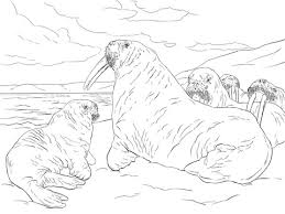 Small Picture Walrus Family coloring page Free Printable Coloring Pages