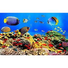 3d fish wallpaper. Modren Fish 3D Fish Wallpaper Intended 3d D