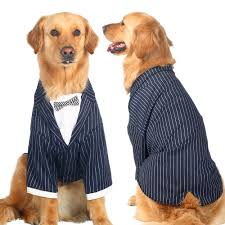 Wedding Clothes For Large Dogs
