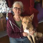 Passiflora Home (@passiflorahome) Followers | Instagram photos, videos,  highlights and stories