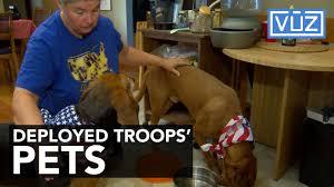 troops pets 1501538955.jpg